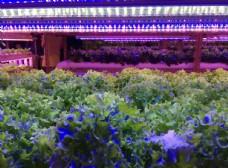 植物灯 室内 红蓝