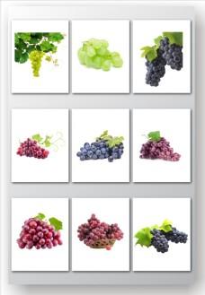 水果葡萄矢量素材