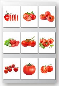 蔬菜西红柿矢量素材