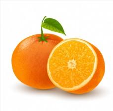 新鲜的橙子矢量素材
