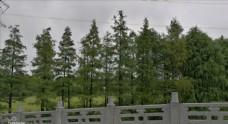 湿地公园内的绿化景观