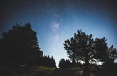 夜色下的树林风景