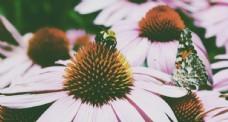 鲜花 鲜花背景