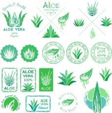 绿色新鲜芦荟植物图标
