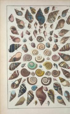 复古 欧式 怀旧 贝壳 插画