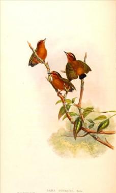 手绘小鸟 彩色插画 手绘鸟类