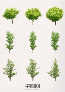 植物绿色树木素材