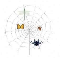 蜘蛛网  自然景观