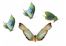 精致美丽蝴蝶透明素材