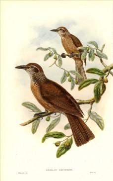 彩色插画 手绘鸟类 鸟类太阳鸟